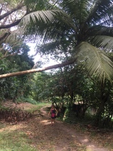 Giant palm. Giant.